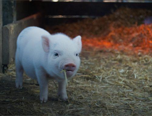 Was Sie zur Tierversicherung besser wissen sollten